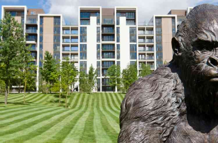 """A bronze scuplture entitled """"Silverback Gorilla"""" is pictured at the London 2012 Olympic Athletes Village in the Olympic Park in east London, on July 12, 2012. The 2012 Olympic games will begin on July 27, 2012. AFP PHOTO/LEON NEAL"""