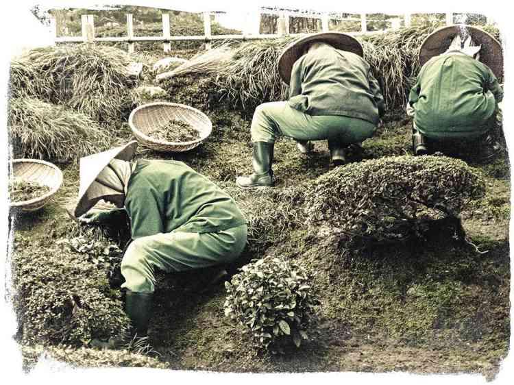 """6 - """"A Kanasawa au Japon : trois femmes, trois jardinières, trois mètres carrés. Pour nous Occidentaux, les jardins japonais sont artificiels. Pour les Japonais, il n'existe pas de jardin plus naturel. Le naturel serait donc culturel."""" -"""