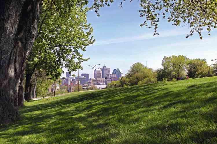 """En prendre plein la vue  au parc du Mont-Royal""""Montréal a la chance d'avoir de sublimes parcs pour se promener en compagnie des écureuils, courir ou tout simplement respirer au rythme de la nature. Dans le parc Laurier,  on joue à la pétanque. Et on vient au parc du Mont-Royal  pour le son des tam-tams le dimanche et pour la vue,  vraiment extraordinaire."""" Photo: Aurélien Faidy / Divergence"""