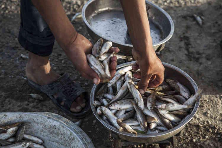 Les pêcheurs se plaignent de ne trouver que de petits poissons ou des espèces de piètre qualité. La sécheresse de 2015 a tué les poissons.