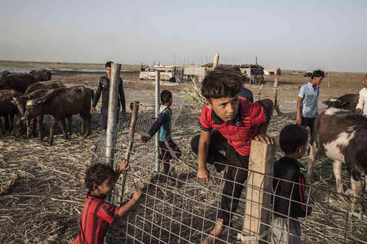Quinze enfants et jeunes hommes aident Oum Mahdi à élever les buffles, préparer le fromage, couper les roseaux, tisser les palmes, pêcher, et s'approvisionner en eau et en vivres en ville.