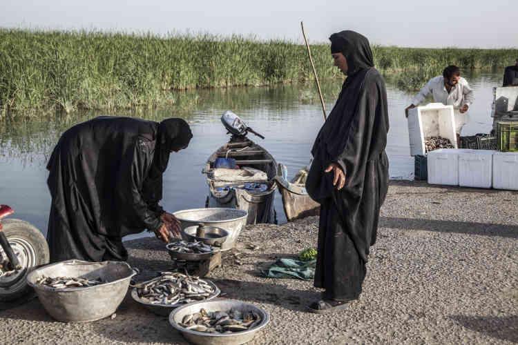 L'un des pêcheurs peste contre un poisson qui pullule dans les marais, dont personne ne sait comment et pourquoi il n'est apparu qu'après2003. « C'est normal, il avait peur du parti Baas [de Saddam Hussein] », rétorque quelqu'un, d'un trait d'humour typiquement irakien.