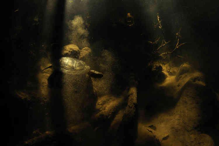 Premier prix reptiles amphibiens poissons – Marco Colombo (Italie). Une«Emys orbicularis», en Sardaigne, en Italie.Cette espèce, avec des taches jaune d'or sur sa peau et sa carapace, est braconnée en tant que NAC (nouveaux animaux de compagnie). Ses flashs étant défectueux, Marco se concentra pour utiliser au mieux la lumière naturelle.