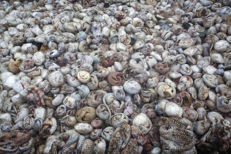 Premier prix photojournaliste image unique – Paul Hilton (Royaume-Uni, Australie). L'une des plus importantes saisies de pangolins enregistrées, environ 4000 mammifères congelés dans un container, dans le port de Belawan, à Sumatra, en Indonésie.Ils étaient destinés aux marchés chinois et vietnamien, où ils sont utilisés comme aliment ou pour la médecine traditionnelle.