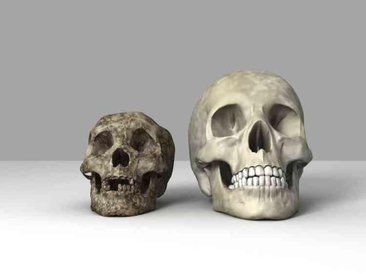 L'homme de Flores, découvert en2003 dans une grotte indonésienne, a vieilli deux fois en2016: une première étude a d'abord corrigé la date de sa disparition, qui serait intervenue non pas il y a 16000ans, mais il y a environ 50000ans. Puis la découverte d'un fragment de mâchoire et de six dents datés de 700000ans a suggéré que le «Hobbit», ainsi surnommé en raison de sa petite taille, appartenait à une espèce à part entière, qui n'a pas survécu à l'arrivée dans la région de l'homme moderne.
