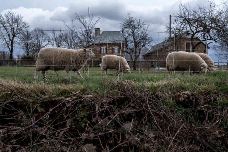 Des brebis paissent devant la maison familiale des Peyrac. Selon l'Agence bio, le nombre d'exploitants agricoles autorisés à accoler le sigle de la feuille verte sur leur production a progressé de 12% en un an pour atteindre le nombre de 32 326 à la fin de 2016.