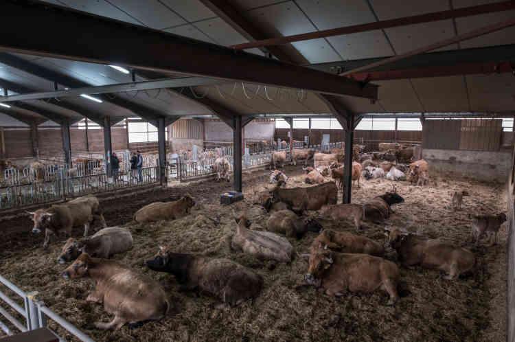 Henry Peyrac se dit fier de ne plus utiliser de produits chimiques dans son élevage de cent quarante bêtes.