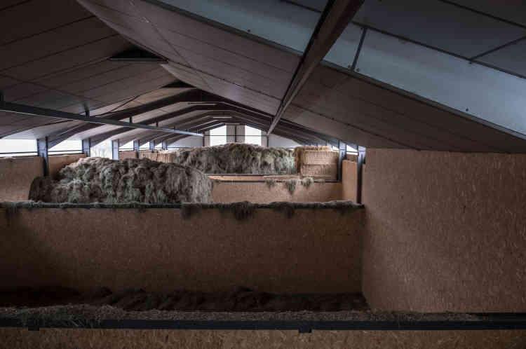 La réserve de foin naturel dans un hangar de l'exploitation.