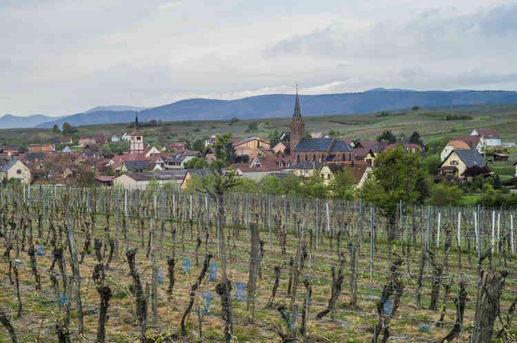 Le village de Balbronn (Bas-Rhin) vu des vignes. La commune viticole en compte 200hectares.