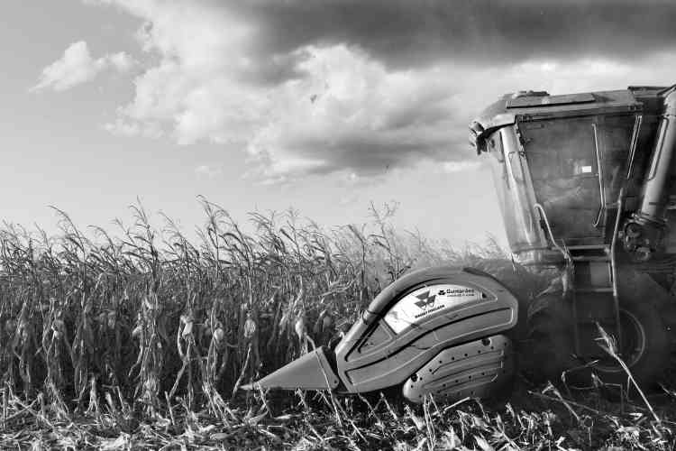 Moisson du maïs près de la ville de Sinop, en juillet 2013. Dans cette région, il y a jusqu'à quatre moissons par an.