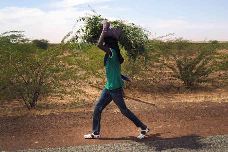 Sur la route entre le village de Yassene et le village d'Ayorou, dans l'ouest du Niger. Les populations locales vivent essentiellement de l'élevage et de l'agriculture.