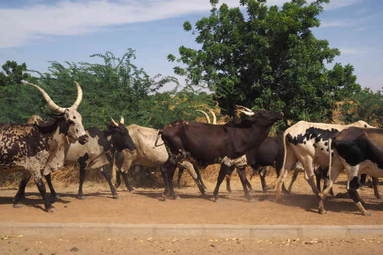 A la sortie du village d'Ayorou.