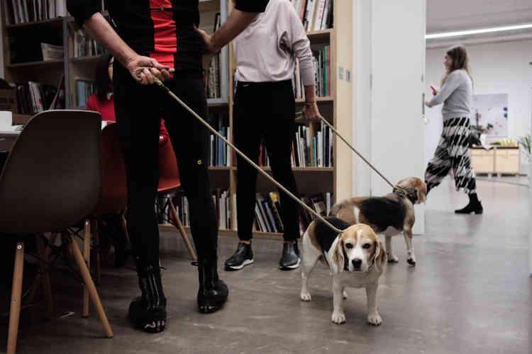 Les beagles des McMullen vont bientôt poser sous l'œil de Martin Parr. Ici tenus en laisse par la maman, photographe, et le papa venu en tenue de cycliste. Un assistant de Martin Parr devra presser énergiquement une balle sonore pour réveiller les chiens.