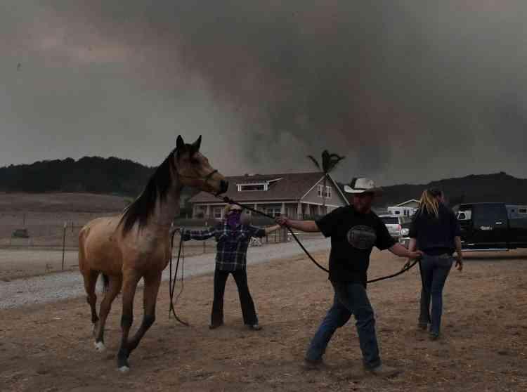 Les chevaux du Laughing Dog Ranch à Ojai ont été évacués le 9décembre.