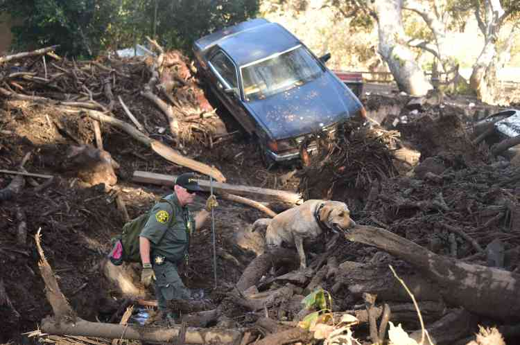 Les dégâts concernent une surface de 78 kilomètres carrés, a précisé le département de la protection des forêts de Californie.