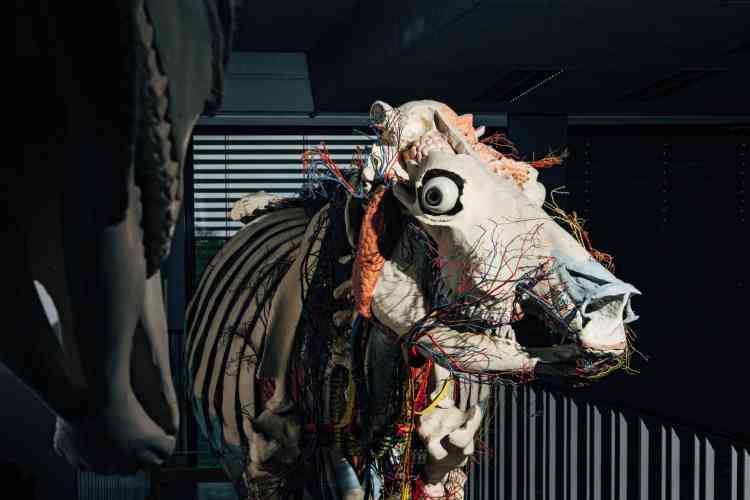 Ecorché de la vache Heidi, exposé dans une salle de conférences de l'Université libre de Berlin, en 2017.