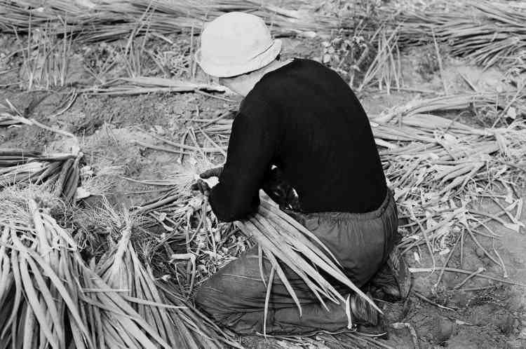 «Les images de Michael Schmidt représentent des ouvriers du secteur alimentaire, des corbeilles à pain, des cages dans les fermes piscicoles. Elles sont souvent présentées ensemble sur des grillages –ce qui crée une impression, forte et puissante, qui dépasse la simple image.»