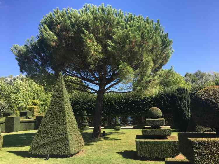Un pin au port libre dialogue harmonieusement avec les ifs taillés aux formes surprenantes qui ont l'air tout droit sorties des traités de jardinage du Grand Siècle.