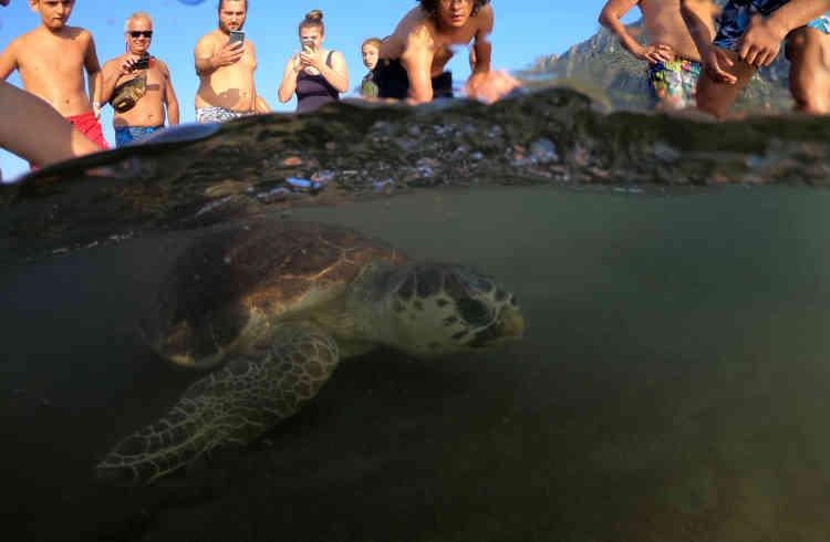 Sous les regards des touristes, une tortue marine est relâchée en mer après avoir été soignée, le 25 août.