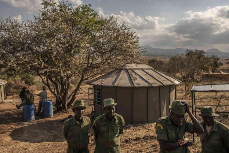 Des rangers communautaires, dans leur camp de Lemomo Hill, dans le parc national d'Amboseli. TenBoma collabore avec les services de renseignement kényans et américains ou encore Interpol, l'organisation internationale de coopération policière, et dit avoir contribué à 24 arrestations de braconniers depuis 2015.