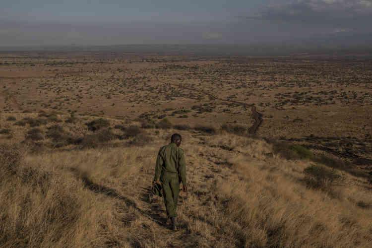 Un ranger communautaire, dans le parc national d'Amboseli, dans le sud du Kenya. Ici, les rangers sont soutenus par le projet «TenBoma», dirigé par l'ONG IFAW, qui recueille des informations auprès des habitants afin de sauver des animaux menacés.