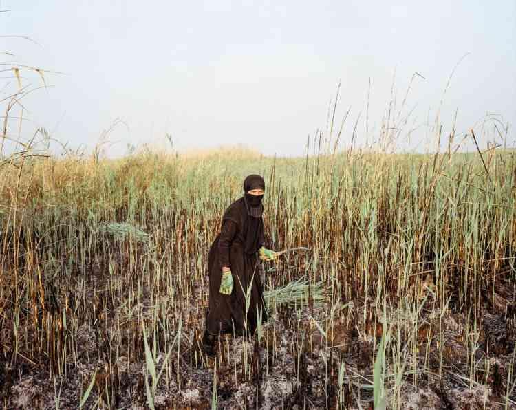 Les roseaux servent à fabriquer les habitations traditionnelles des habitants des marais.