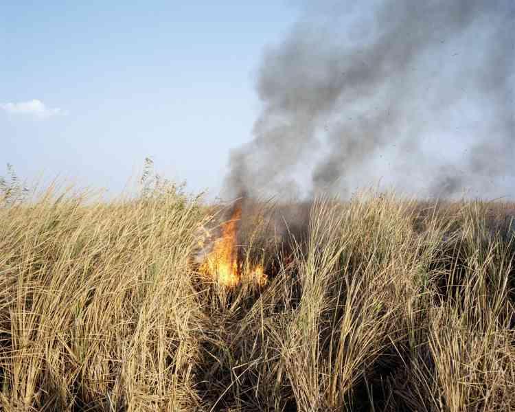 Aujourd'hui, les Arabes des marais, ou Maadans, tentent de survivre grâce à l'agriculture. Ici, la culture sur brûlis.