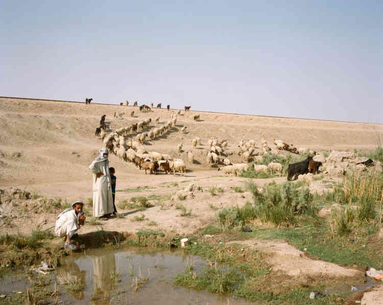 Des bergers et leur troupeau de moutons près de l'Euphrate, à la périphérie de Nasiriyah.