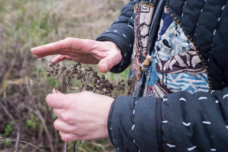 De la tanaise, un répulsif naturel, a été planté dans le verger laissé en frîche.