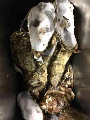 Matthias Marc a grandi avec une grand-mère qui gardait les coquilles d'huîtres mangées à Noël pour les donner à ses poules. C'est bon pour renforcer les coquilles de leurs œufs. Ils vivaient à Appenans dans le Doubs. Aujourd'hui, Matthias Marc cuisine à Substance, dans le 16e arrondissement de Paris, des plats à la conscience environnementale élevée. Très peu de déchets, beaucoup de recyclage en bouillon et en fond. L'un de ses plats-phare, en saison, est l'huître pochée. Il n'a pas de poule dans l'arrière-cour. Il garde donc les coquilles pour les apporter à son ami vigneron Valentin Morel, qui travaille en biodynamie et pilera les 25 kilos d'huîtres acheminés par Matthias comme un engrais naturel. Matthias Marc estchef du restaurant Substance, 18 rue de Chaillot, Paris.