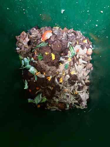 Derrière l'épure du restaurant Tannat, il y a une philosophie simple: «90% de ce que l'on travaille en cuisine, c'est de l'eau. On essore donc nos produits au maximum pour en tirer du gôut et de la texture.» Olivier Le Corre demande à sa brigade de recycler les graines de courges en farine, le pain sec en miso et bien sûr les carcasses animales et les épluchures végétales en fond ou en bouillon. Le marc de café lui sert à atténuer la puanteur de la poubelle organique où végètent os de veau, carcasses de volaille et culs de courges. Mais que faire des 150 kg de coquilles de Saint-Jacques? A entendre Olivier, il est urgent de trouver une solution pour les déchets minéraux et d'apprendre aux fournisseurs à travailler avec des emballages qu'ils peuvent récupérer, plutôt que des cartons qui envahissent les locaux-poubelles lilliputiens dont dépendent les restaurants parisiens. Olivier Le Corre est chef du restaurant Tannat, 119 avenue Parmentier, Paris.