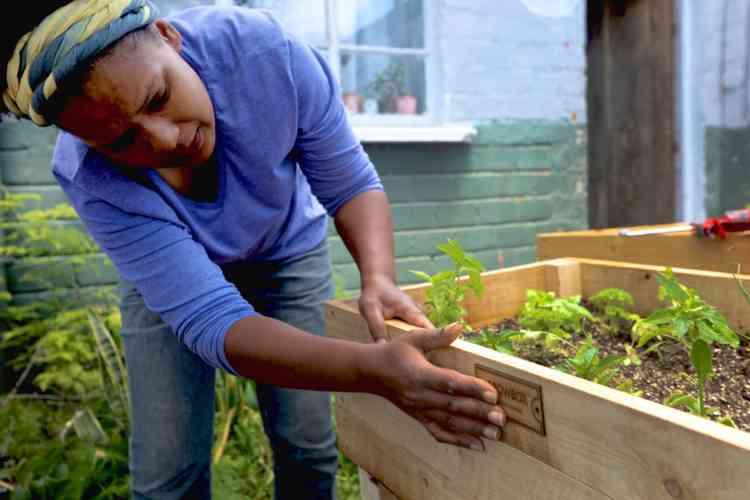 GrowBox permet à quiconque de faire pousser des aliments n'importe où, tant qu'il y a de l'air frais et du soleil. Chaque boîte contient un mélange de terre, des plants et des instructions sur la manière de cultiver les légumes ou les herbes choisis.