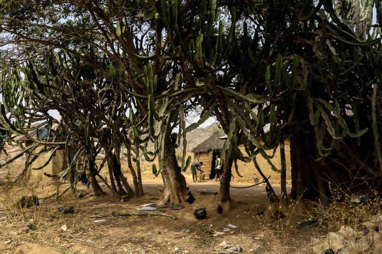 Une ferme du village de Rafiki appartenant à des membres de la communauté rukuba. Celle-ci, majoritairement chrétienne comme les Irigwe, entretient, contrairement à ces derniers, de bonnes relations avec les Peuls.