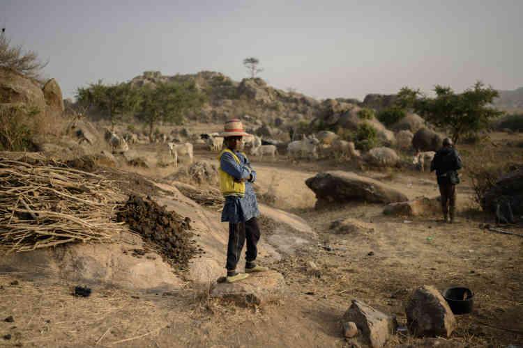 Les jeunes Peuls emmènent leur bétail paître pour la journée sur les terres de leur communauté, à Rafiki, près de Jos, la capitale de l'Etat nigérian du Plateau.