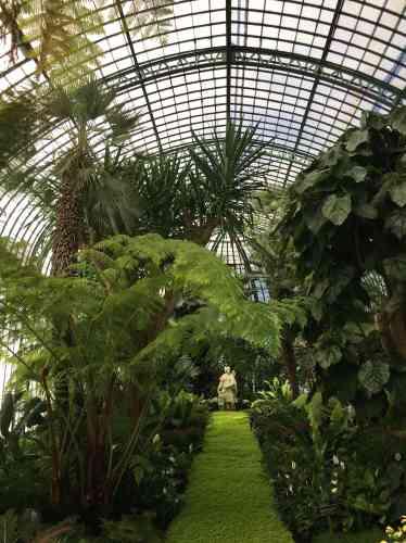 Devant son nom à la statue de la déesse visible au bout de l'allée recouverte de sélaginelle denticulée du plus bel effet, cette serre abrite palmiers, fougères arborescentes, yucca et dombeya.