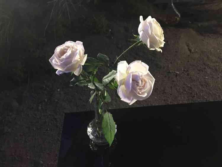Les délicates et odoriférantes roses Wabara ont été produites au Japon par Keiji Kunieda. Présentes aux Floralies de Nantes, on peut aussi les découvrir dans le spectaculaireClos des roses Keijidu Jardin de Séricourt, dans le Pas-de-Calais.