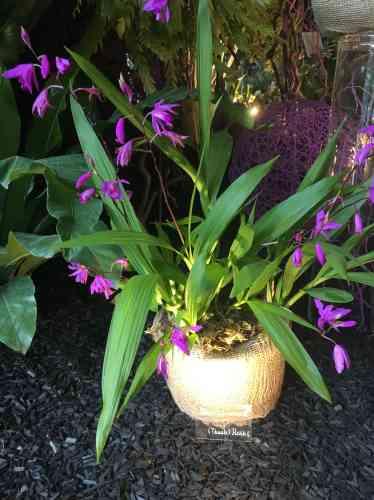 Une autre variété d'orchidée exposée sur le stand du Sénat.