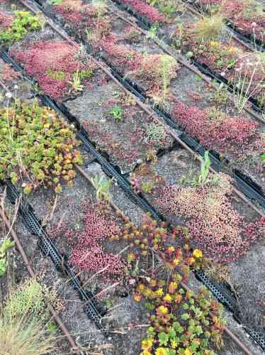 Le toit-terrasse, dont le jardin a également été dessiné par Elizabeth de Portzamparc, est accessible indépendamment du musée.
