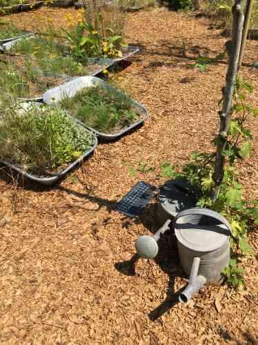 Jardin sans efforts pour le jardinier, puisque ce sont les brouettes à moitié enterrées qui font le travail sans qu'il soit besoin de les déplacer, ce «paradis» s'apparente à une autre sorte de rêve. Les arrosoirs seraient-ils là pour la décoration, alors qu'un goutte-à-goutte semble remplir parfaitement son rôle?