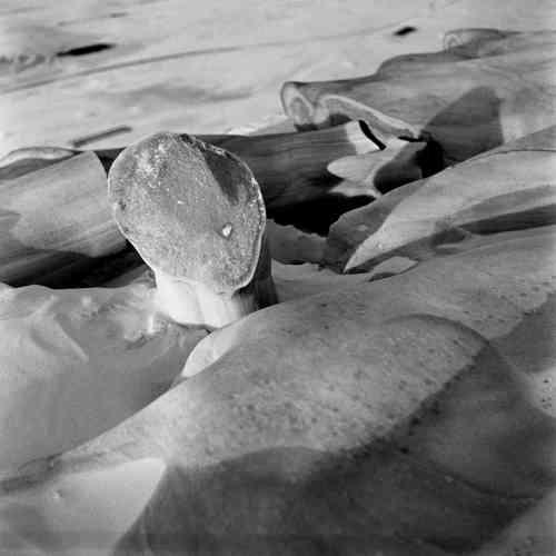 Comme son amie Dora Maar, qui a choisi la photographie comme moyen d'expression, Charlotte Perriand a le sentiment qu'elle est l'outil contemporain par excellence. A partir de 1933, en compagnie de Pierre Jeanneret et de Fernand Léger, Charlotte Perriand se lance dans une véritable aventure conceptuelle autour des objets trouvés, à la recherche de la « leçon des lois de la nature » : galets, silex, racines, bout de bois roulés par la mer… Ces recherches photographiques révèlent un profond optimisme : l'art est dans tout, comme le proclame Charlotte Perriand – et Marcel Duchamp avant elle. Et partout pour qui veut voir et sait regarder.