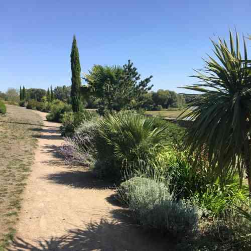 Yuccas, lavande et cyprès.