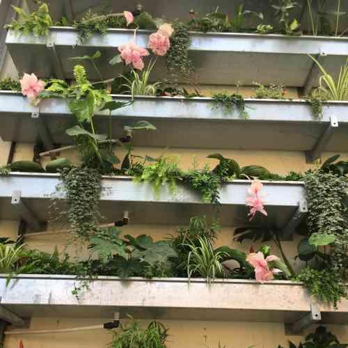 «Etagères» d'un mur végétal.