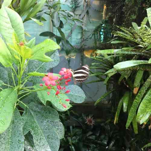 A l'intérieur de la serre aux papillons.
