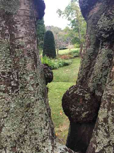 Les troncs recouverts de lichen laissent entrevoir une composition paysagère très travaillée.