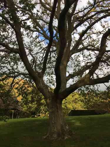 La structure ramifiée de l'arbre s'observe aussi de près.