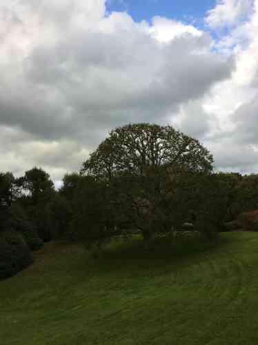 Une taille mesurée met en valeur l'architecture de ce grand arbre isolé.