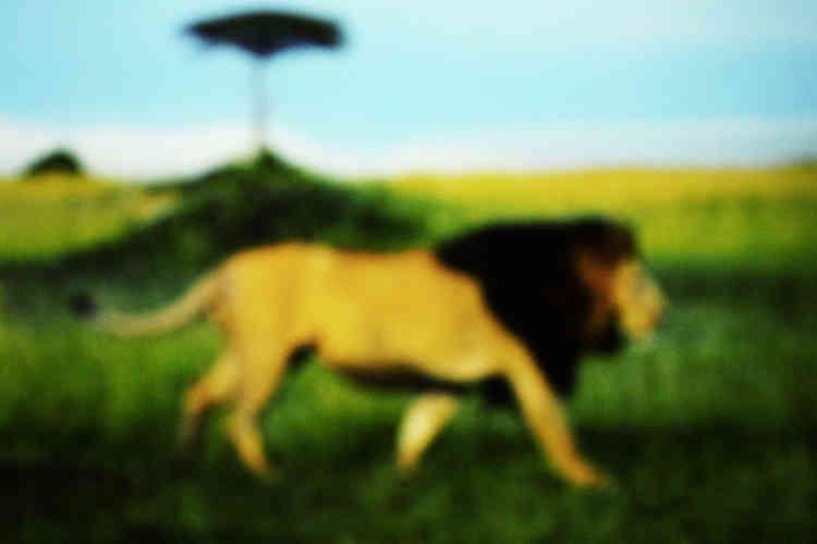 «François Fontaine réalise ses images à partir de projection sur écran de films et de documentaires. La vision onirique qu'il propose des animaux renvoie à une forme archétypale de la représention, qui transporte le spectateur au plus profond de son animalité refoulé.»