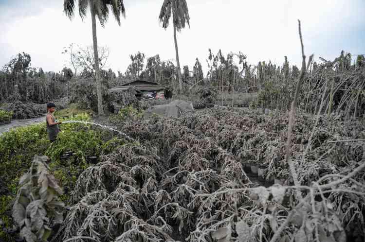 Le 13janvier. A Talisay, comme dans toute la province de Batangas, la cendre du volcan a recourvert la végétation. Ici, un homme nettoie au jet d'eau.