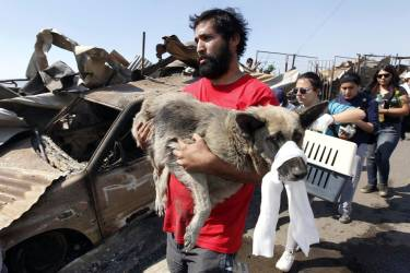 A resident carries an injured dog at the location where a forest fire burned several neighbourhoods in the hills in Valparaiso city, northwest of Santiago, April 13, 2014. At least 11 people were killed and 500 houses destroyed over the weekend by a fire that ripped through parts of Chilean port city Valparaiso, as authorities evacuated thousands and used aircraft to battle the blaze. REUTERS/Eliseo Fernandez (CHILE - Tags: SOCIETY ENVIRONMENT DISASTER ANIMALS)